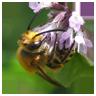 jardin-biodiversite