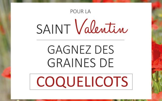 Gagnez des graines de coquelicots pour la Saint-Valentin !
