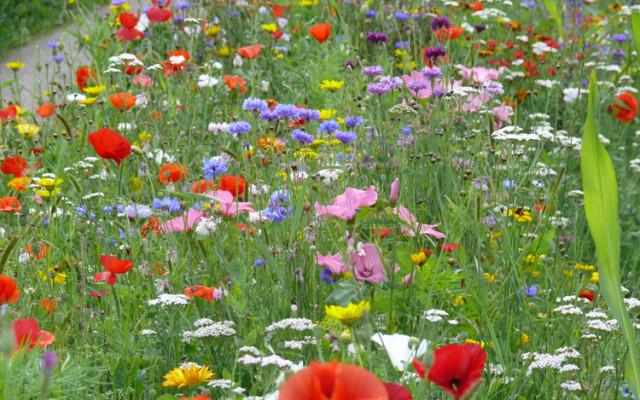La fauche d'une Prairie Fleurie
