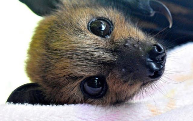 Installer un refuge à chauve-souris