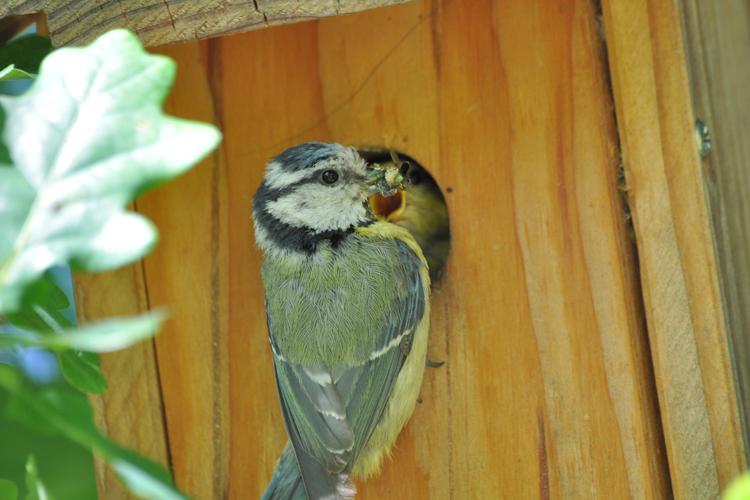 Accueillir les oiseaux dans son jardin