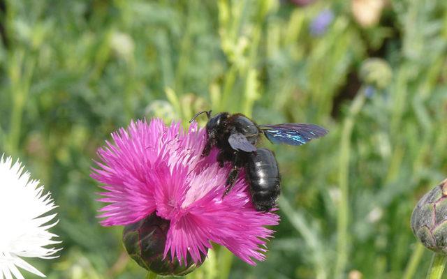 Les insectes auxiliaires utiles