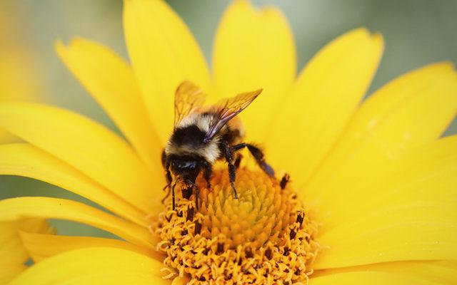 Le monde sans abeilles