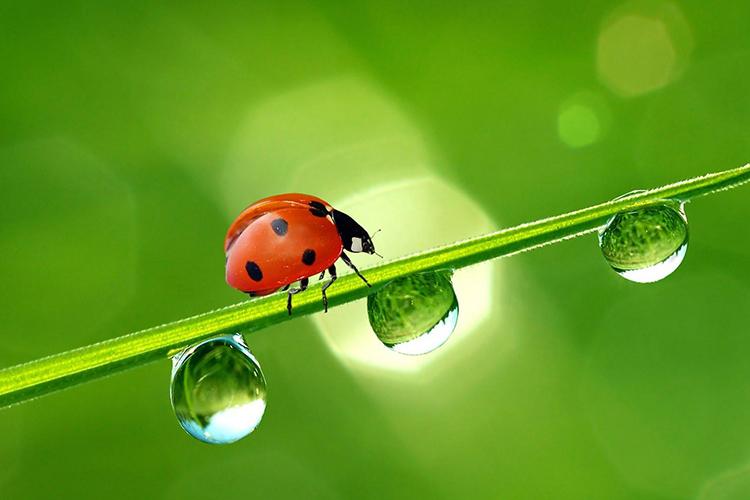 Moins de pesticides, plus de bio-contrôle !
