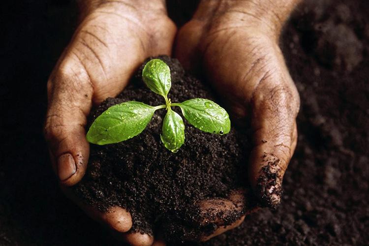 Le Compost : Entre trie et patience